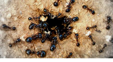 Formiche che entrano in un buco