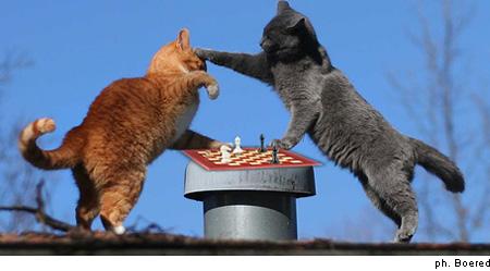 Gatti giocano a scacchi sui tetti