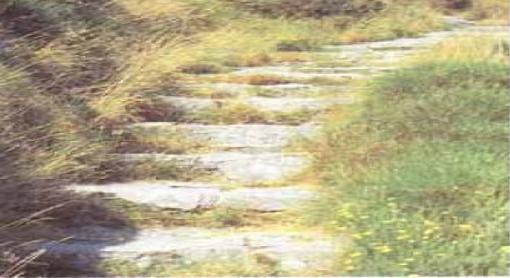sentiero.jpg
