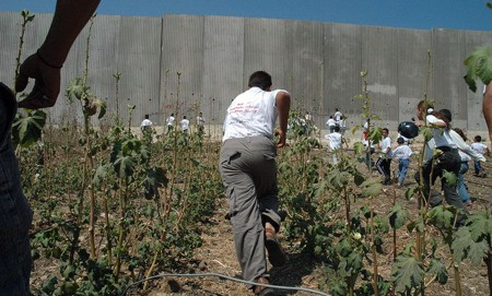 Muro di Israele nella West Bank (Justin McIntosh 2004)
