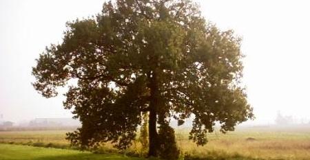 quercia
