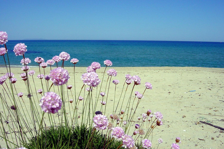 Cemento sulle dune di badesi ancora il manifesto for Villaggio li cuncheddi sardegna