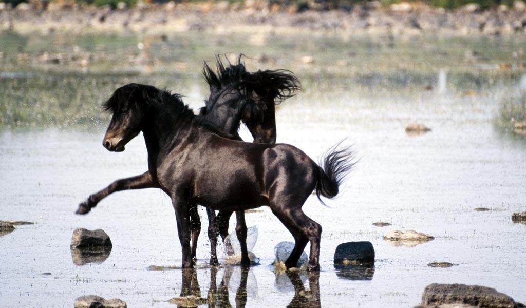 cavalliniintro_d0