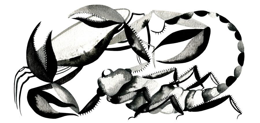 AriannaVairo-scorpio