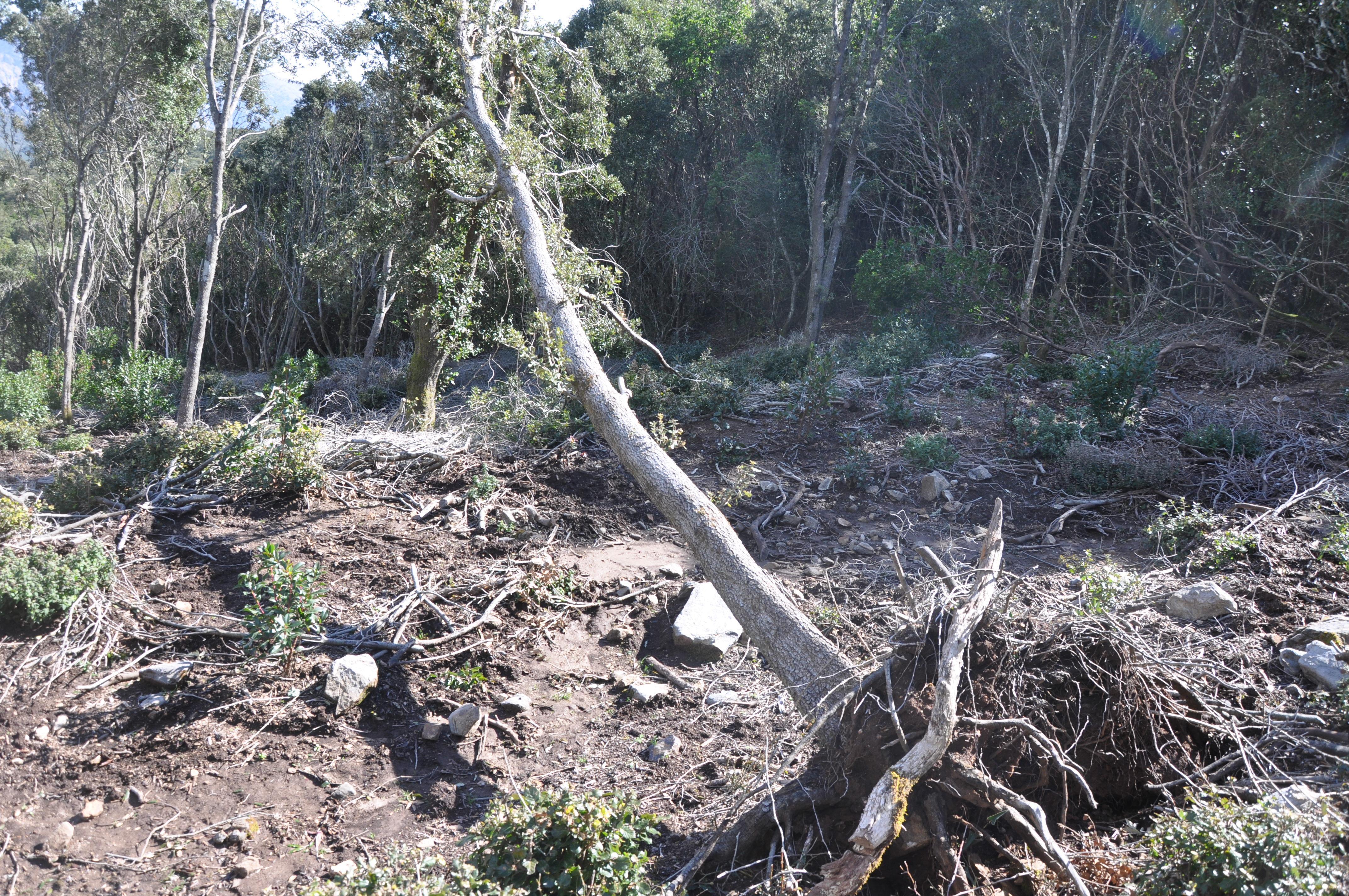 foresta marganai