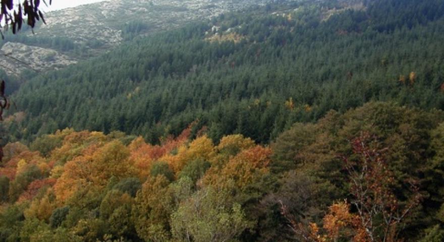 Complesso forestale del Castagno