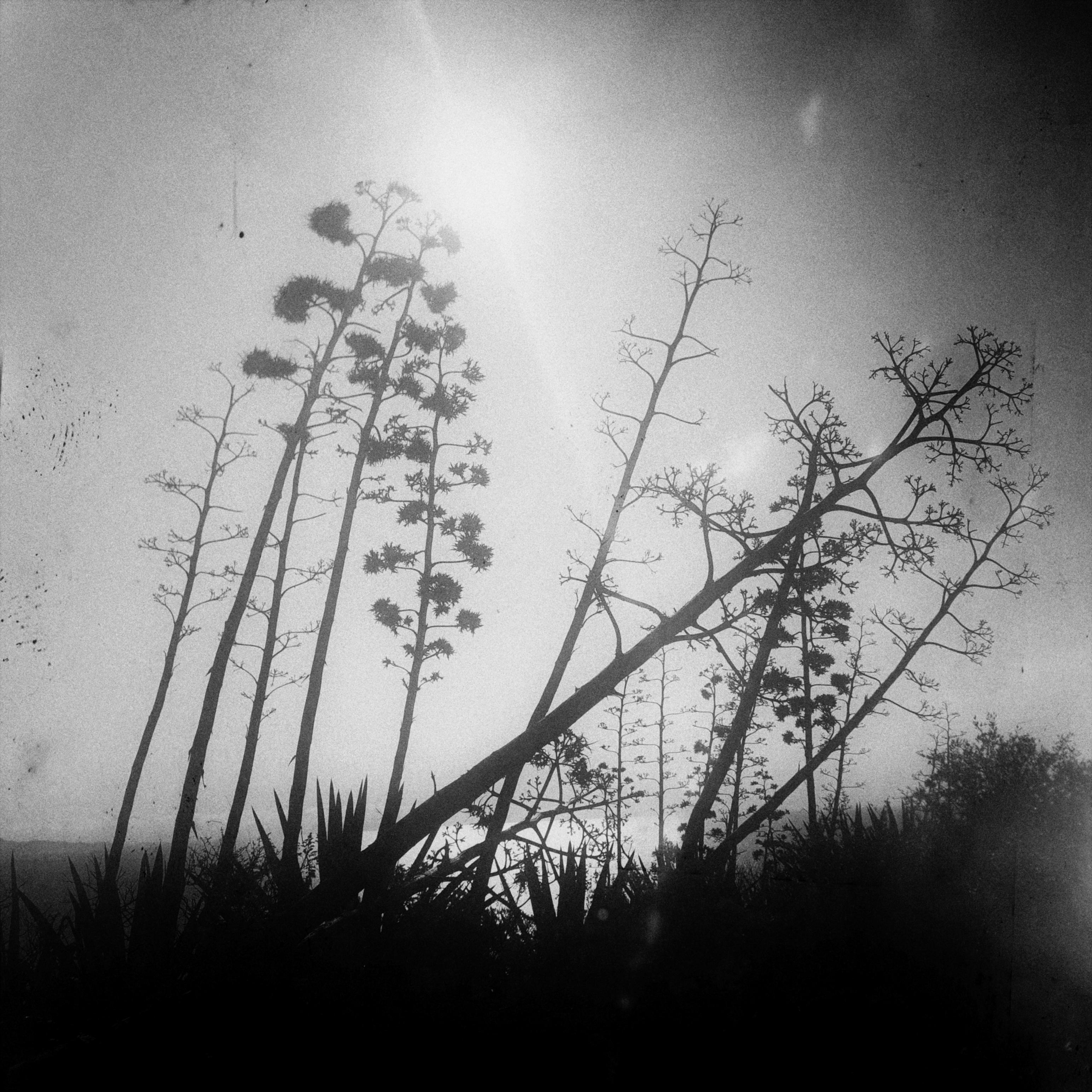 Foto di Davide Tronci